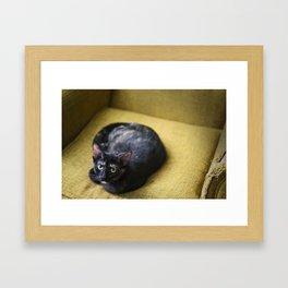 Catnaps Framed Art Print