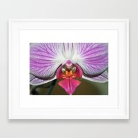 orchid Framed Art Prints featuring Orchid  by Sammycrafts