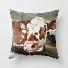 Calf in stalls at farm Throw Pillow