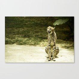 Cheetah in the Sun Canvas Print