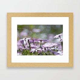 Daisy Bokeh Framed Art Print