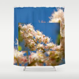 Macro of blooming Aesculus Shower Curtain