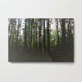 Forest Trail XXXI Metal Print