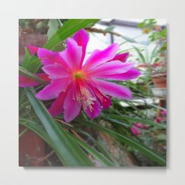 "BLOOMING FUCHSIA PINK "" ORCHID CACTUS"" FLOWER Metal Print"
