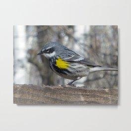 Yellow Throated Warbler Metal Print
