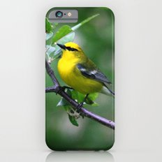 Blue-winged Warbler iPhone 6s Slim Case