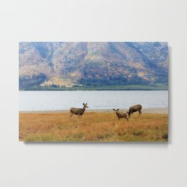 Jackson Lake, Wyoming II Metal Print