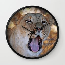Tired lion - Africa wildlife Wall Clock