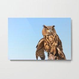 Owl in Daylight Metal Print