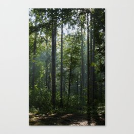 Green forest shrouded the sun. Canvas Print