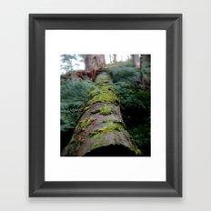 Fallen Log Framed Art Print