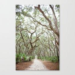 Oak Tree Path Canvas Print