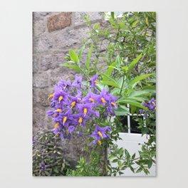 Purple Peace Canvas Print