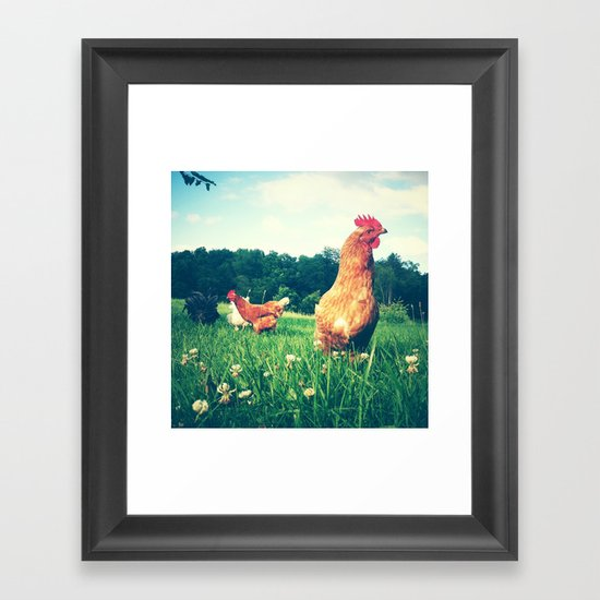 The Life of a Chicken Framed Art Print