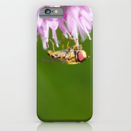 Hoverfly on Allium - Onion Flower 3 iPhone Case