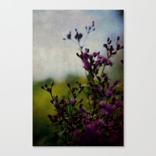 Ironweed Canvas Print