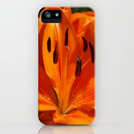 Tangerine Dreams iPhone Case