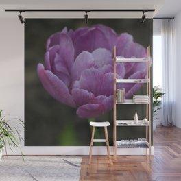 Purple-petalled tulip Wall Mural
