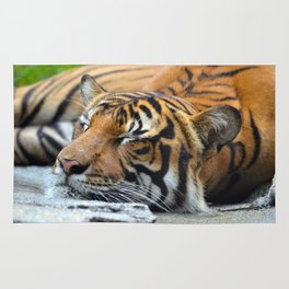Tiger, Tiger Fast Asleep Rug