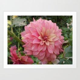 Flor de Alhambra  Art Print