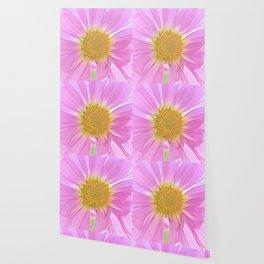 Pink Daisy Wallpaper