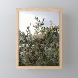 mountain mahogany Framed Mini Art Print