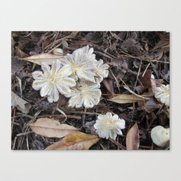 Garden Mushrooms Canvas Print