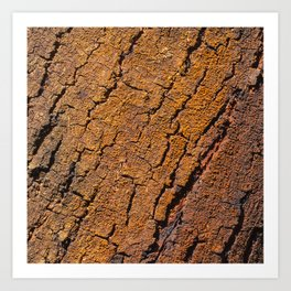 Orange tree bark with rustic wrinkles Art Print