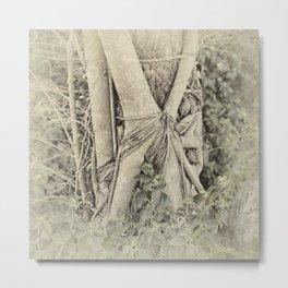 Strangler fig in forest Metal Print