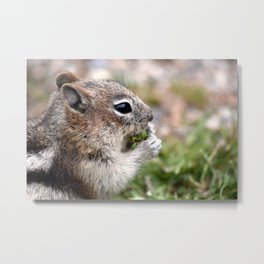 ground squirel having a snack Metal Print
