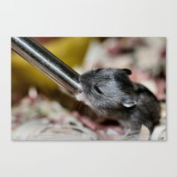 hamster Canvas Prints featuring Tiny Hamster by IowaShots