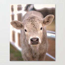 Spring Calf Canvas Print