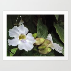 Flower Study II Art Print