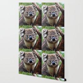 Koala 1218 Wallpaper