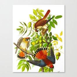 Sparrow Vintage Scientific Bird & Botanical Illustration Canvas Print