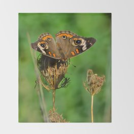 COMMON BUCKEYE BUTTERFLY IN THE FALL (Close-Up) Throw Blanket