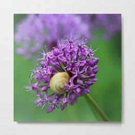 Allium Flower Metal Print