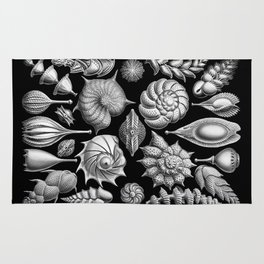 Sea Shells (Thalamophora) by Ernst Haeckel Rug