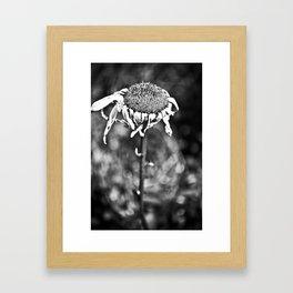 Wilted Flower Framed Art Print