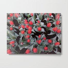 Keukenhof Red 2 Metal Print