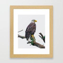 Bemidji Eagle II Framed Art Print
