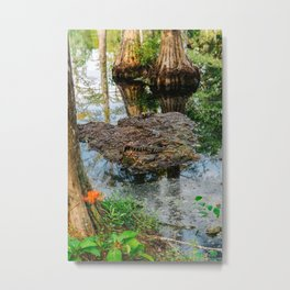 Afternoon Alligator Nap Metal Print