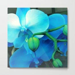 Aqua, Blue and Violet Exotic Orchid Metal Print
