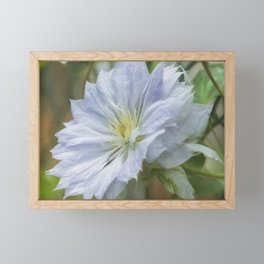 Climbing Clematis Vine Framed Mini Art Print