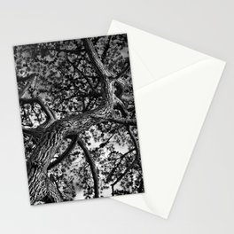 A Study of a Canadian Pine Tree Stationery Cards