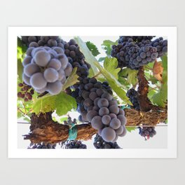Grapes 3 Art Print