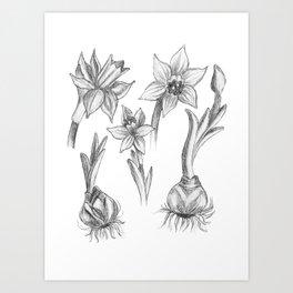 Black and White Daffodils Art Print