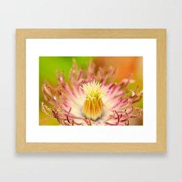 Spring Bloom - no8477 Framed Art Print