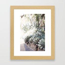 The Succulent Room at Longwood Framed Art Print