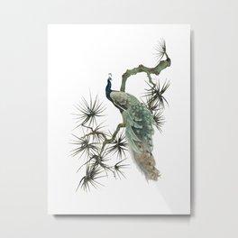 Turquoise Peacock Metal Print